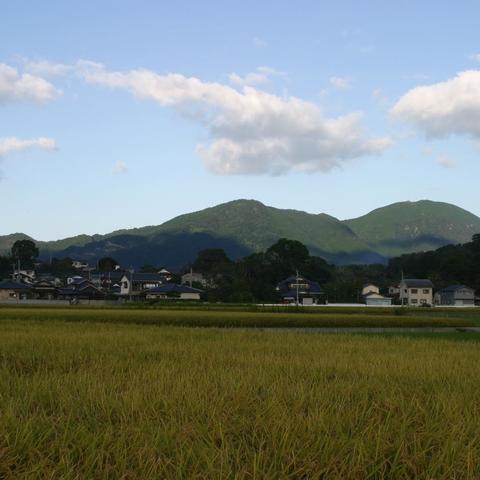 伊加利の田んぼ